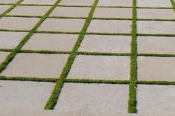 gras-tussen-tegels